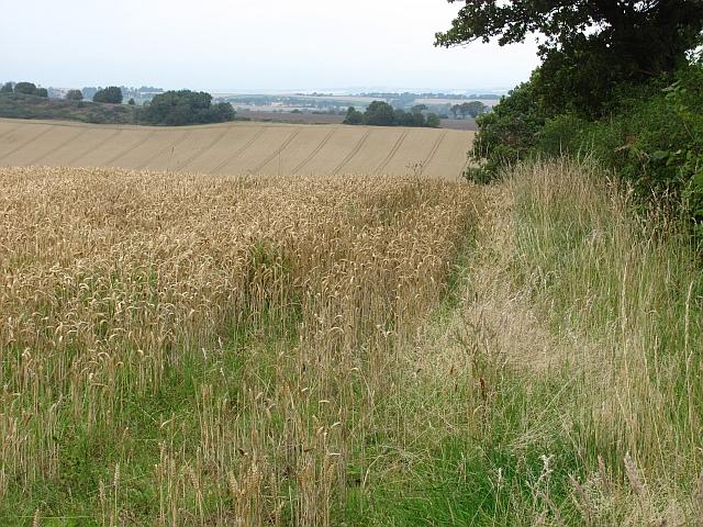 Wheat, Ochiltree