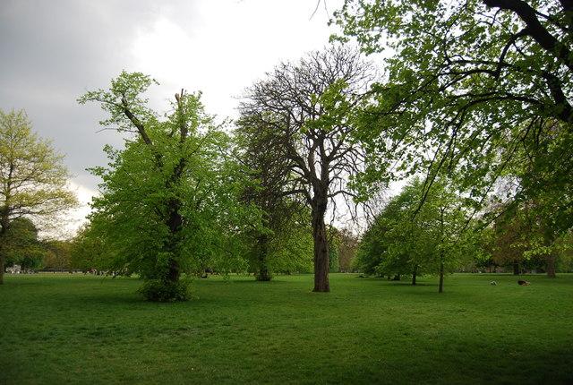 Trees, Hyde Park