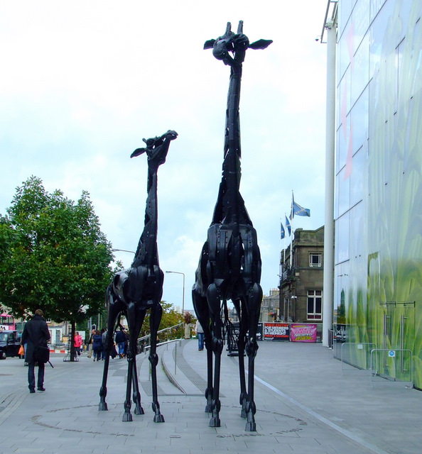 Giraffes on Leith Street