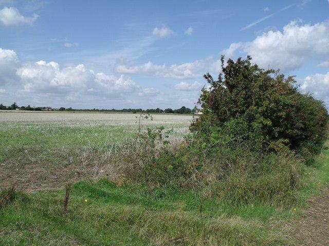 Hedgerow and Field near No Man's Friend Farm