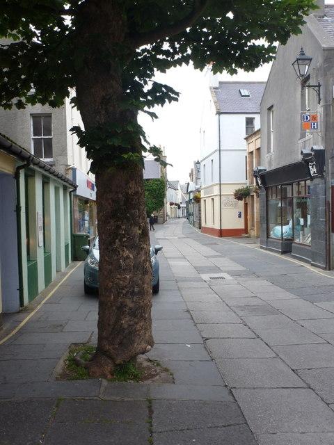 Kirkwall: tree in Albert Street