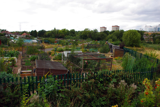 Allotments near Aston Webb Boulevard