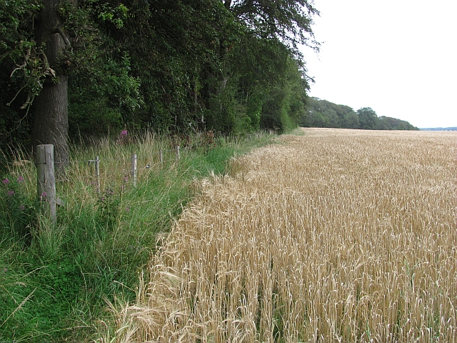 Moor Plantation