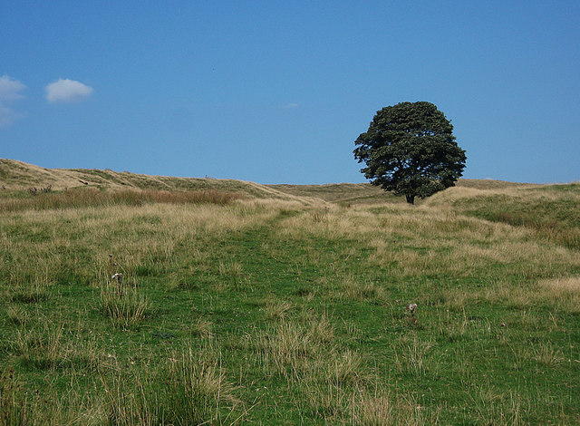 Lonesome tree in the Piethorne Valley