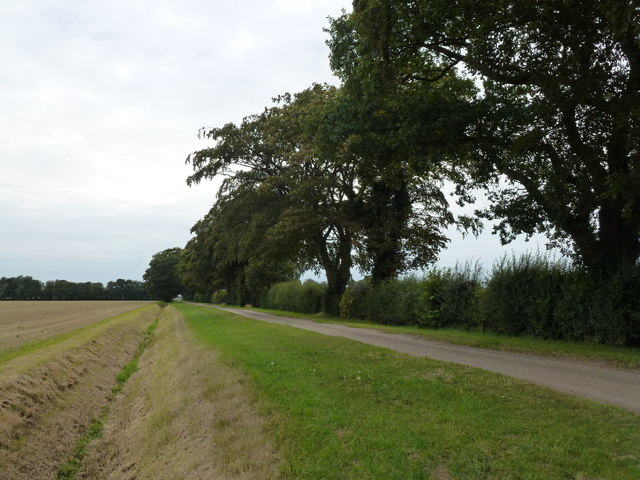 Archer's Drove east of Thorney