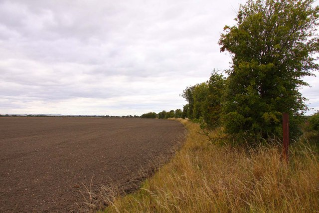 Field by the hedgerow