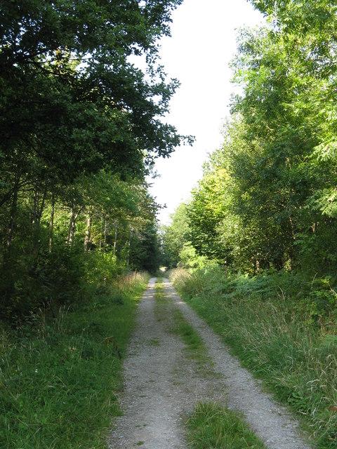 Long walk into Taylor's Wood