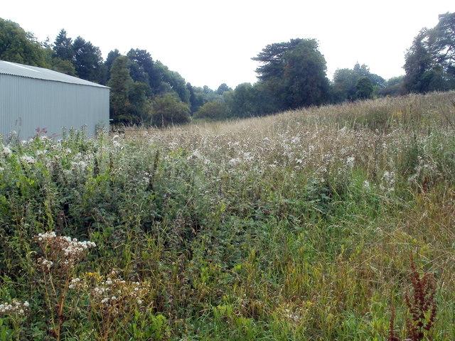 Field of weeds, Nantgavenny Lane, Mardy