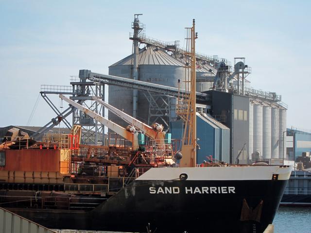 Sand Harrier by Fisherman's Wharf