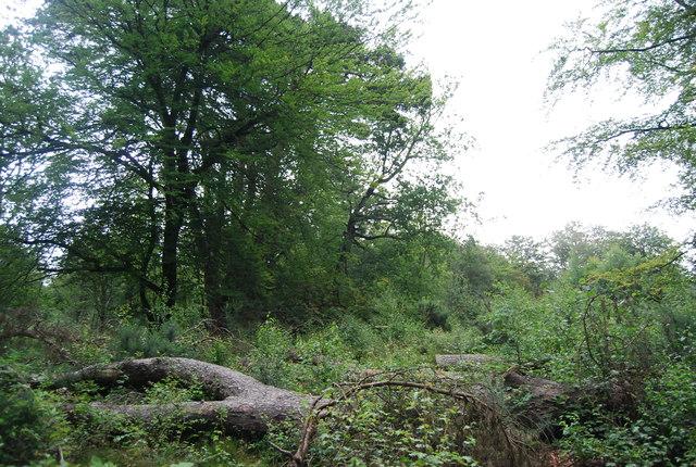 Dense vegetation, Black Down