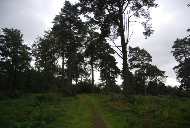 Path over Black Down