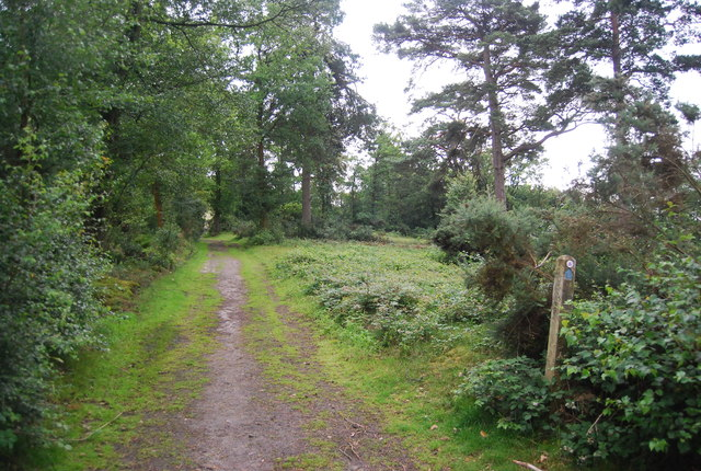 Sussex Border Path, Black Down