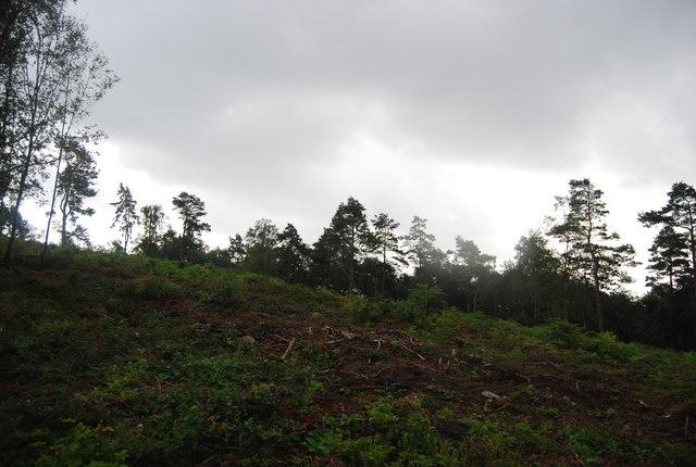 Heathland and woodland, Black Down