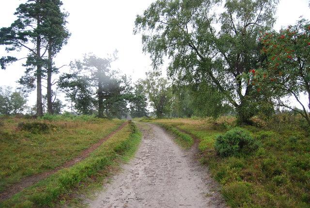 Serpent Trail on Black Down