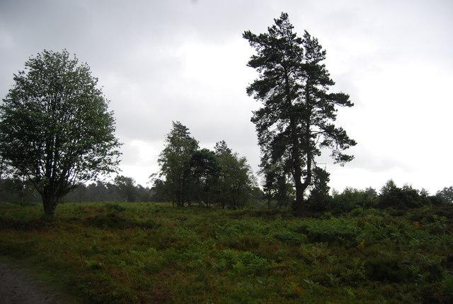 Mixed vegetation on Black Down