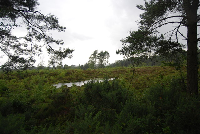 Small pond on Black Down