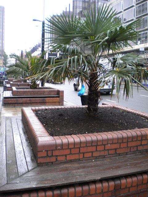 Plant life, Victoria Street SW1