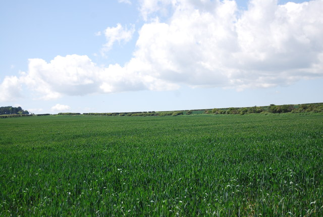 Wheat field, The Due