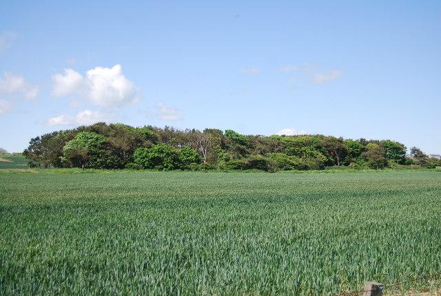 Woodland, Dunstan Stead