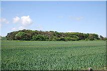 NU2422 : Woodland, Dunstan Stead by N Chadwick