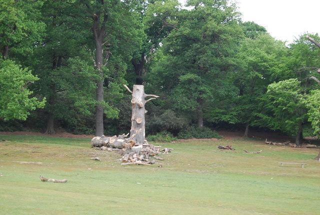 Dead tree, Spankers Hill Wood