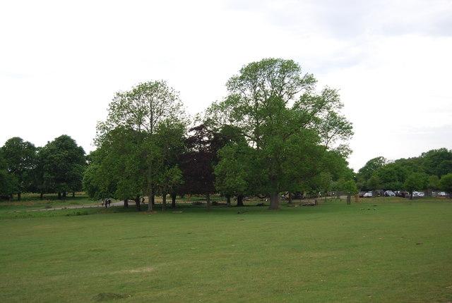 Clump of trees, Richmond Park