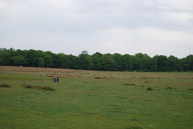 Walking in Richmond Park