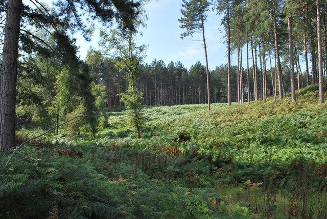 Rowney Warren Woods Near Chicksands