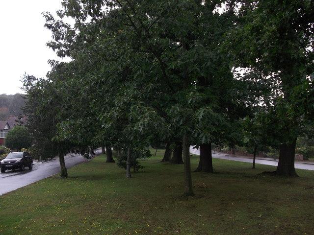 Oak Trees and green on Broad Oaks Way