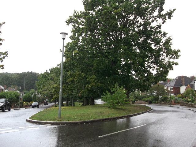 Oak Trees and green on Broad Oaks Way (2)
