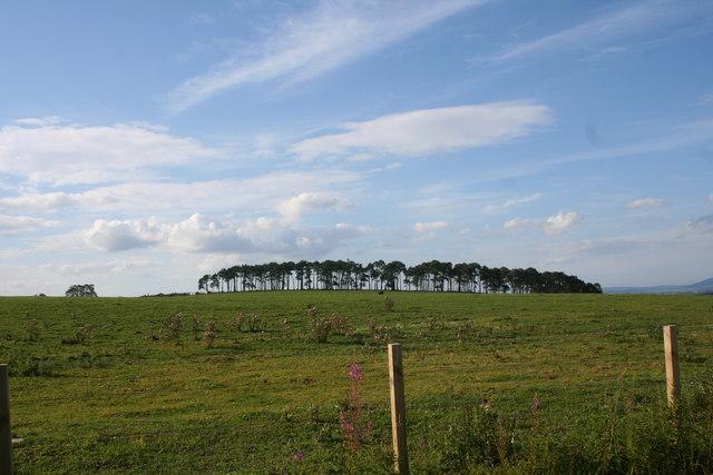 Cot Hill
