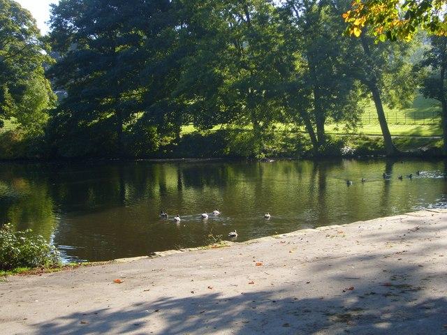 Lake in Graves Park