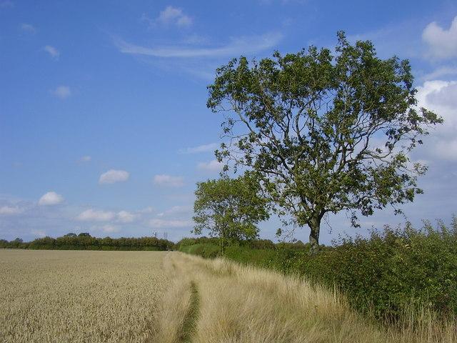 Coombe Fields-Centenary Way
