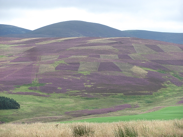 Patterns in the heather, Wrae Hill