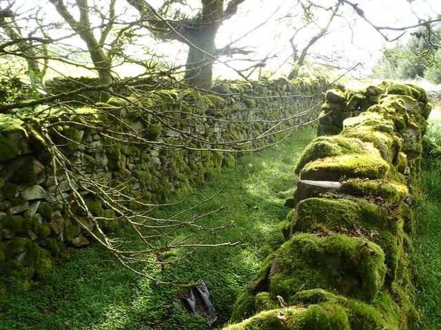 Moss covered dykes at the forest edge
