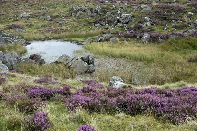 Moorland Tarn, Sleddale Forest