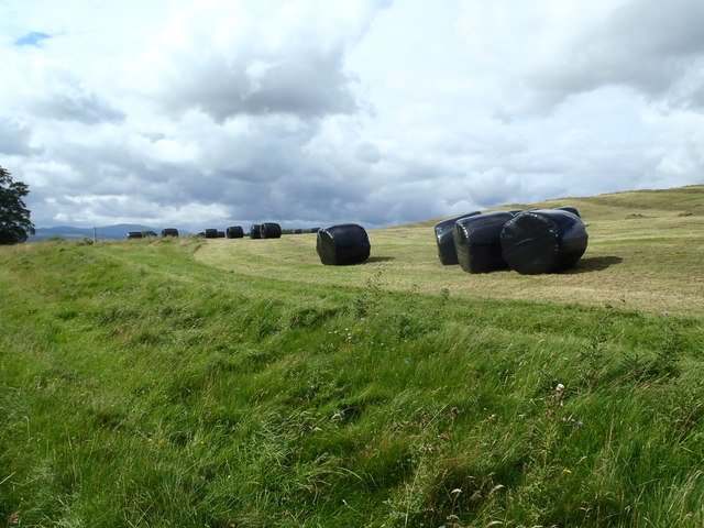 Silage awaits collection on David's Hill