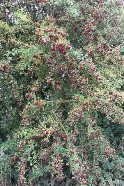 Berries on the byway