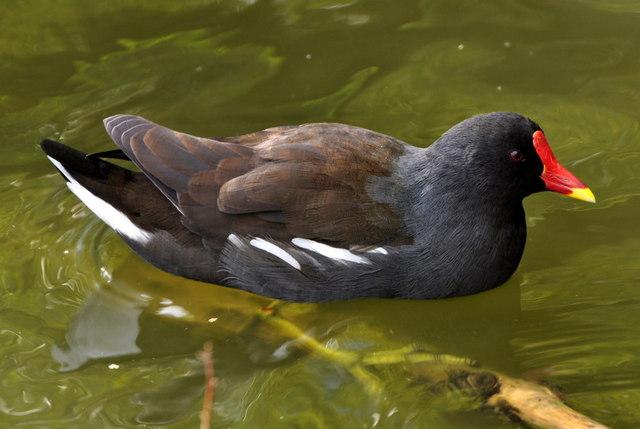 Unknown red beaked bird