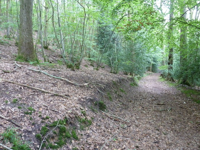 Serpents Trail through Upper Bowley Copse near Queen's Corner