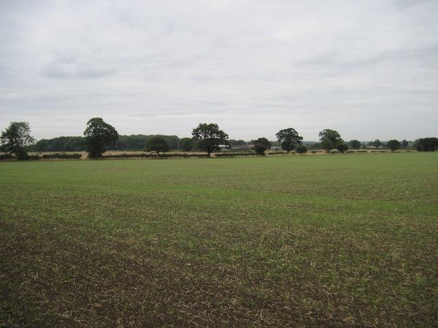 Winter  Barley  and  Colton  Haggs  Farm