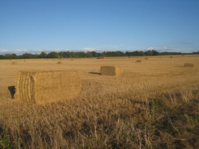 Harvest time - Pardown