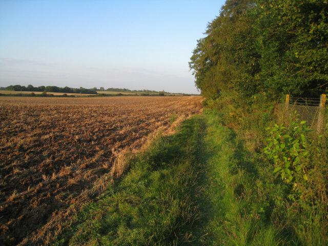 Ploughed field margin