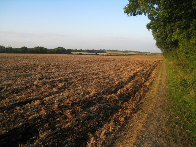 Path along the field