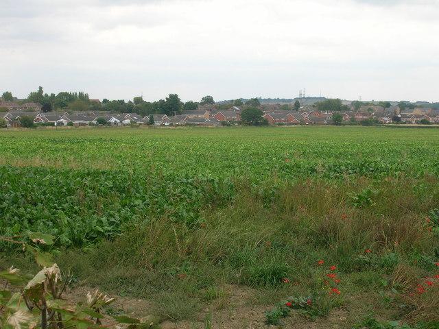 Farmland off Moor Lane South