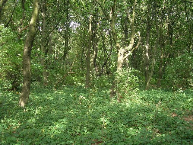 Gulling Wood