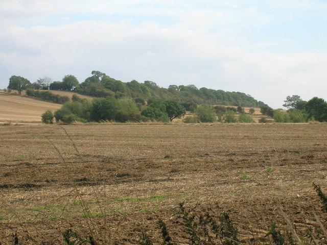 Farmland off Hellaby Lane