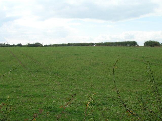 Farmland, Clifton Common