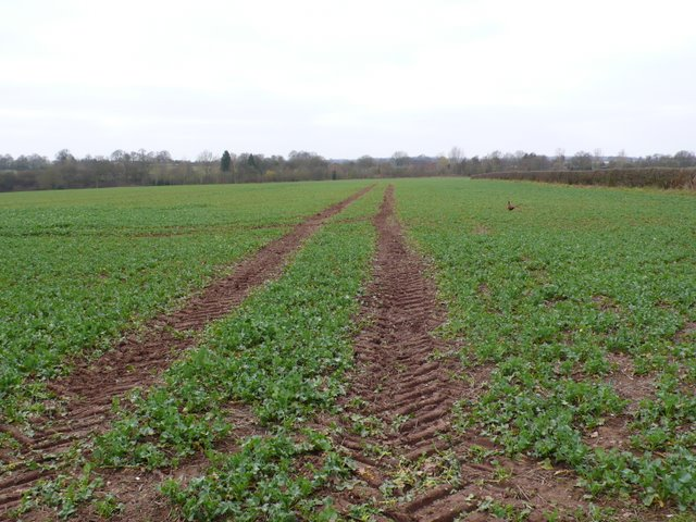 Root crop and Pheasant.