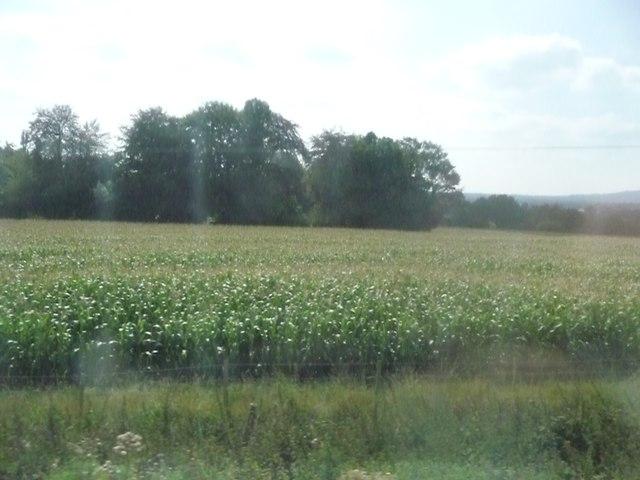 Mole Valley : Field near Brockham